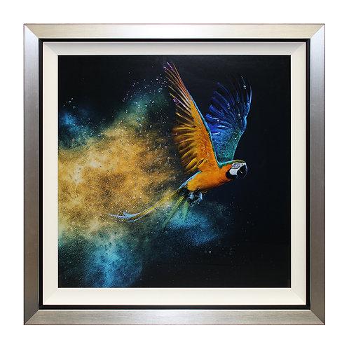 Flying Colours II Liquid Art Framed Wall Art