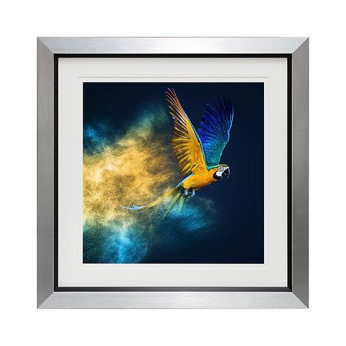 Flying Colours Liquid Framed Wall Art