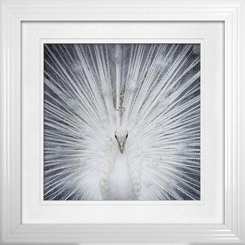 Albino Peacock Liquid Resin Framed Wall Art