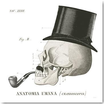 Plexi Collection - Dandy Bones II