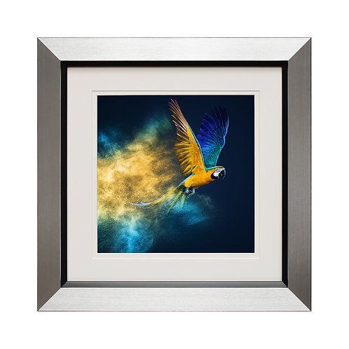 Flying Colours II Framed Wall Art