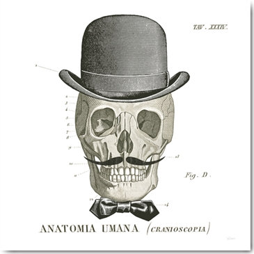 Plexi Collection - Dandy Bones IV