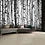 Thumbnail: Black & White Birch Trees Feature 4 Piece Wall Mural
