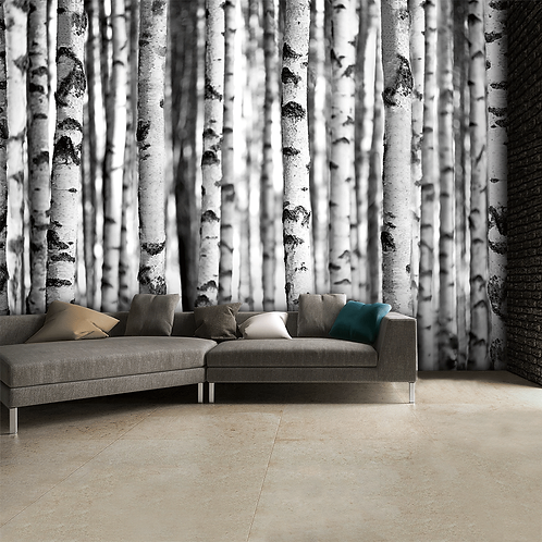 Black & White Birch Trees Feature 4 Piece Wall Mural