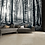 Thumbnail: Black & White Nature Forest Feature 4 Piece Wall Mural