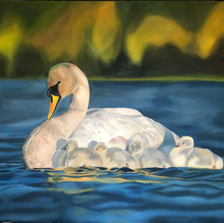 Cygnet's First Outing