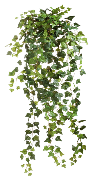 ivy-vines-clear-cut-png-30.png