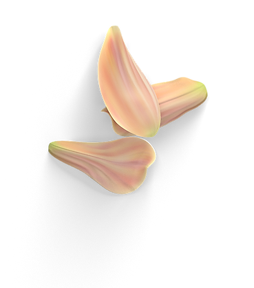 flower 5.png