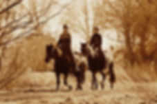 horse-riding-4030864_1920.jpg