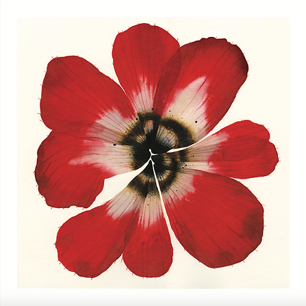 Red Bloom.png