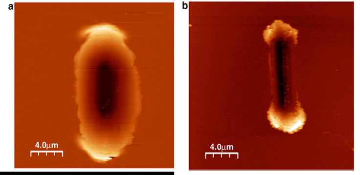 AFM images of a wear track on the (a) Au sample and (b) Au-MoS2 sample.