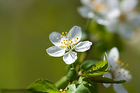 small_tree_flower_by_dreamyourwonders.jp