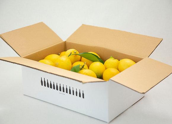 ワイン農家の「もぎたてレモン」