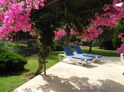 Eneas bouganvillea by pool