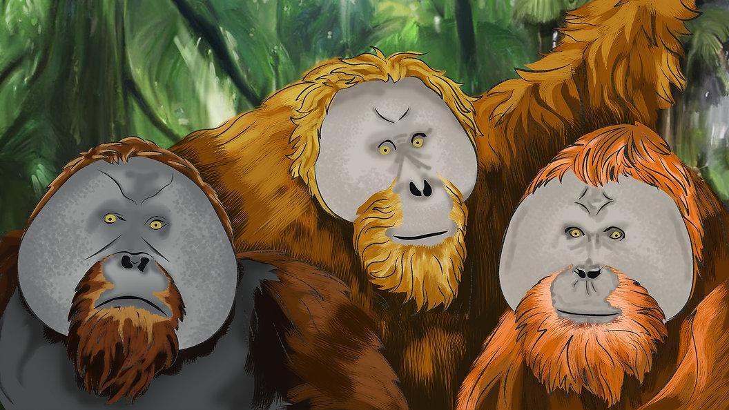 orangutan bertiga.jpg
