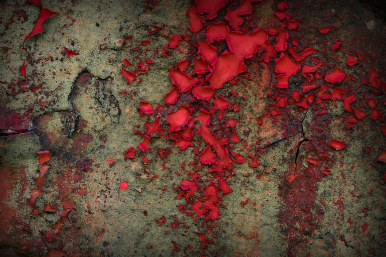 Rain Red Roses