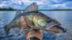 Walleye fishing in Sweden.jpg