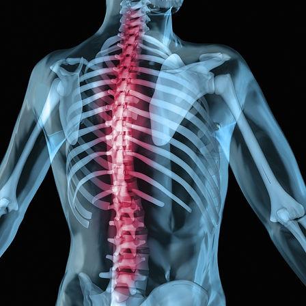 Rücken mit Wirbelsäule und Bandscheiben Rückengymnastik