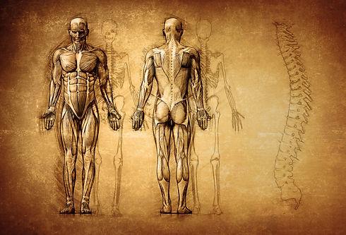 Anatomie.jpg