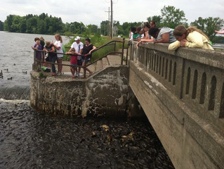 Summer of Discovery 2014 - A River of Many Fish