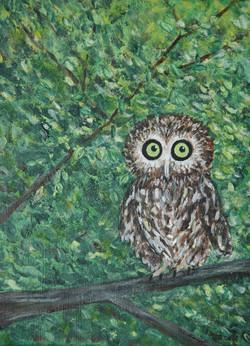 whey owl
