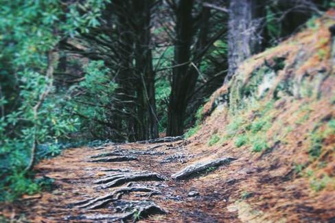 Mount Victoria, Wellington (Canon 550d)