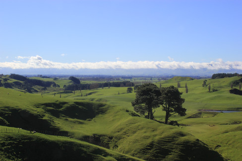 The rolling hills of the Shire - Matamata (Canon 550d)