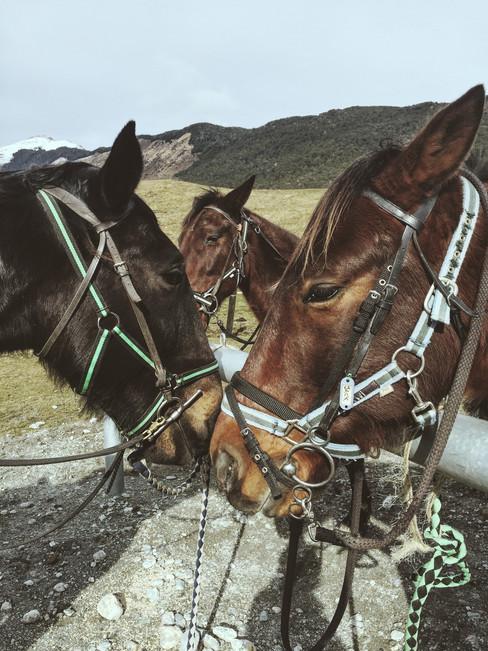 Horse Riding, Paradise, Glenorchy (iPhone 6)