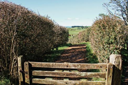 Lanes, Hobbiton, Matamata (Canon 550d)