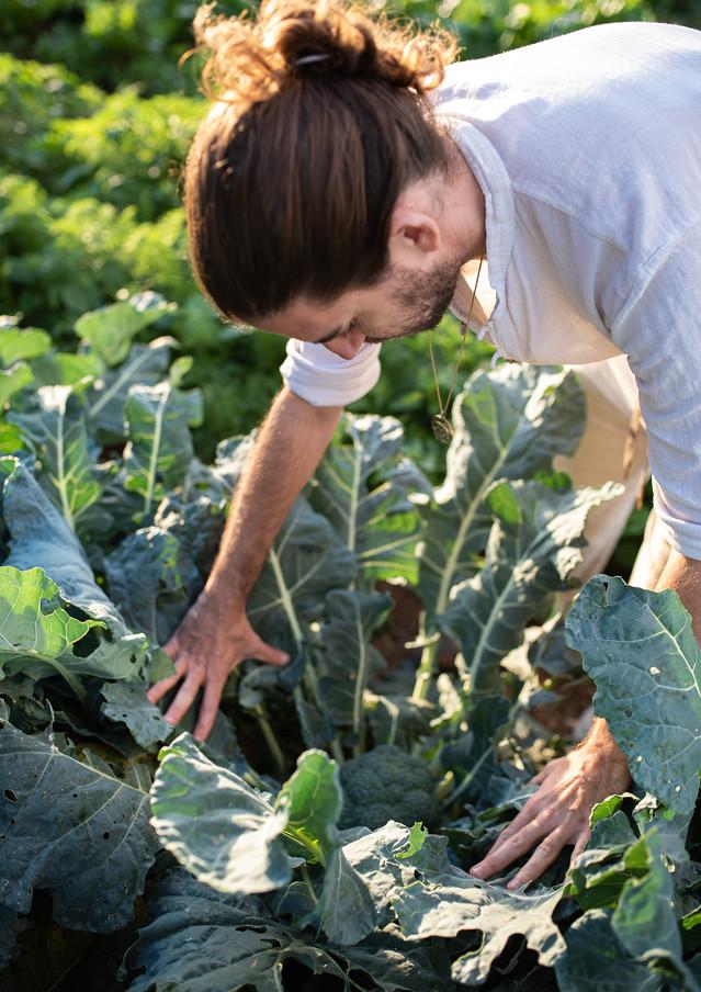 אסף בן משה, אור קפלן, צלם אוכל ותרבות, חקלאות אורגנית בישראל