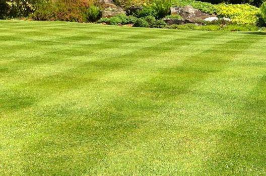 lawn-aeration-2.jpg