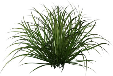 forrest grass.png