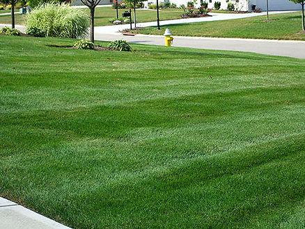 lawn-aeration-1.jpg