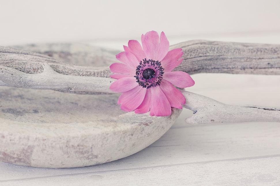 Kirschblüten, Cherry blossom, copyright Andrea Haase