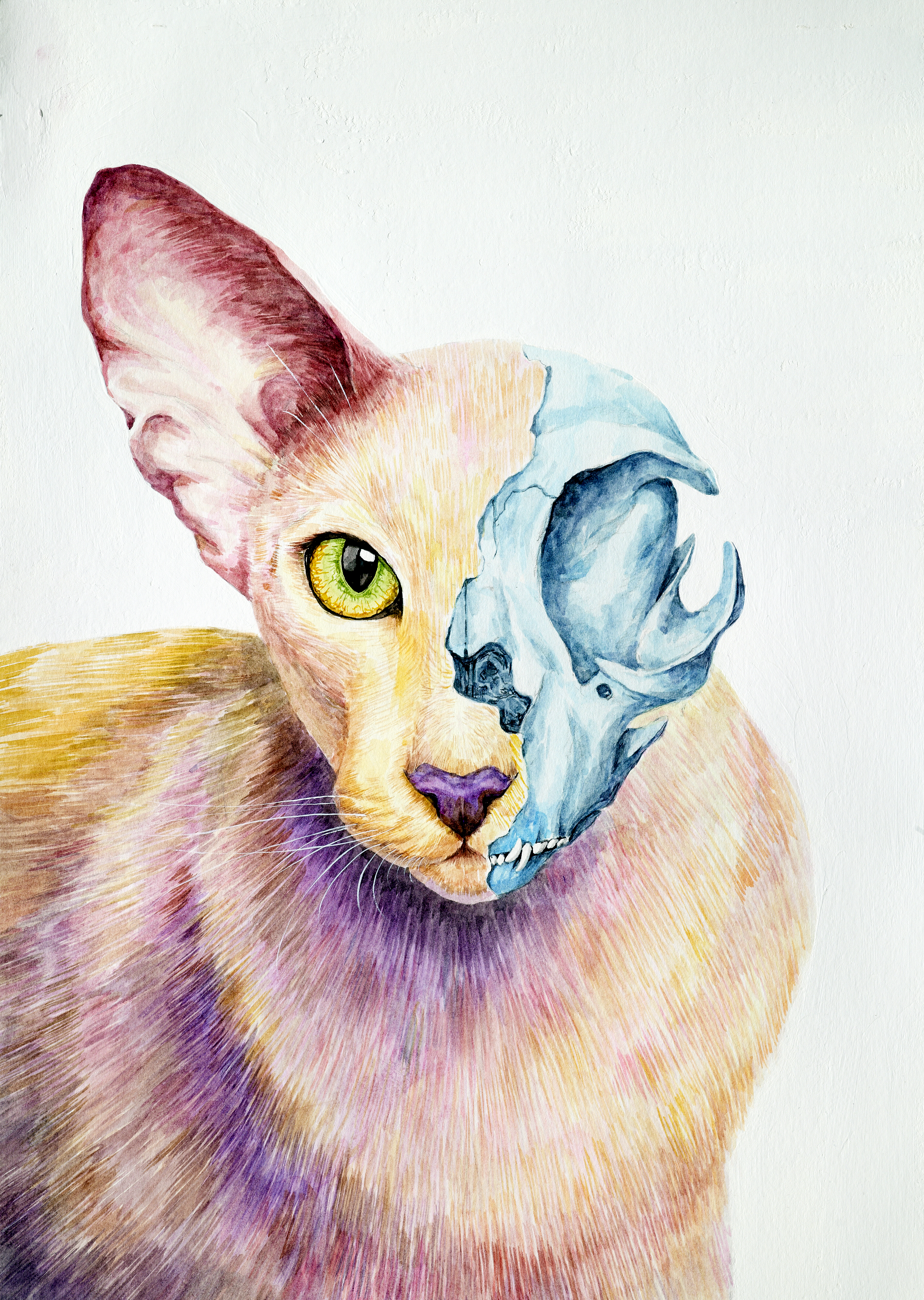 Color Universe – 07