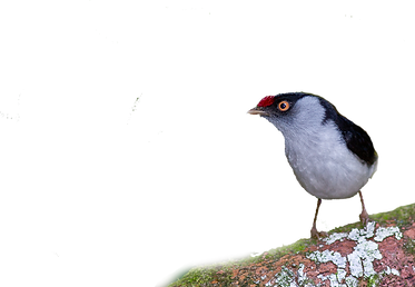 ilicura png.png