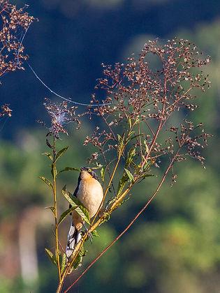 Ubatuba birds