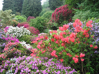 Ramster GardenRamster garden2.jpg