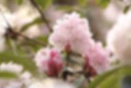 rhodie spring.jpg