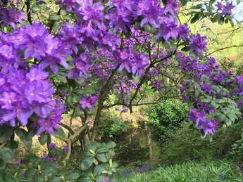 In bloom this week: 23rd April