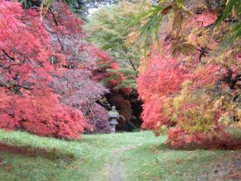 The garden is open for spectacular autumn 2019 colour