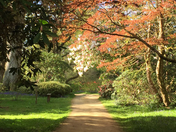 In Pictures: A walk around our garden this morning
