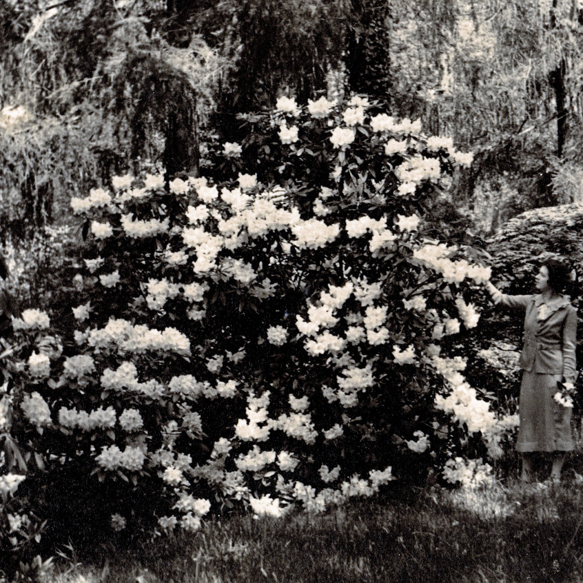 Lady Burke Ramster Garden Archive