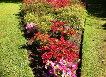 The Hyde Azalea collection & plant sales
