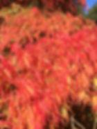 Ramster Autumn pics2015-10-02 13.37.34.j