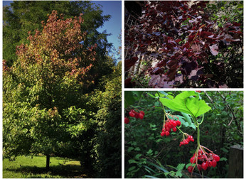 Opening soon for Autumn colour
