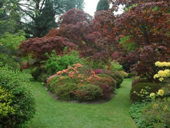 In the garden this week