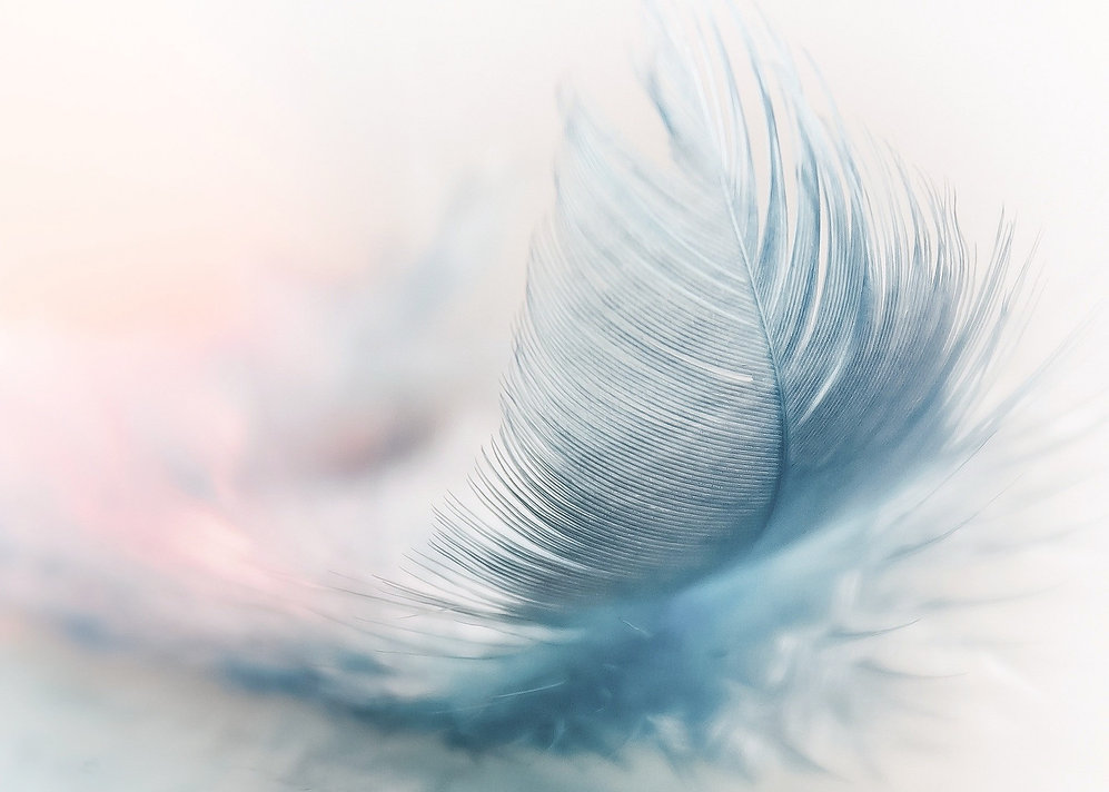 feather-3010848%20Kopie_edited_edited.jp