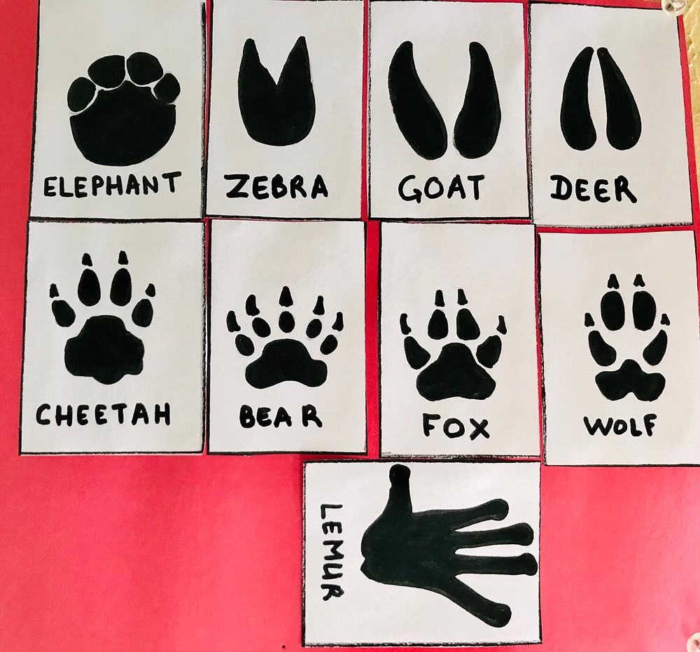 Mammal footprints