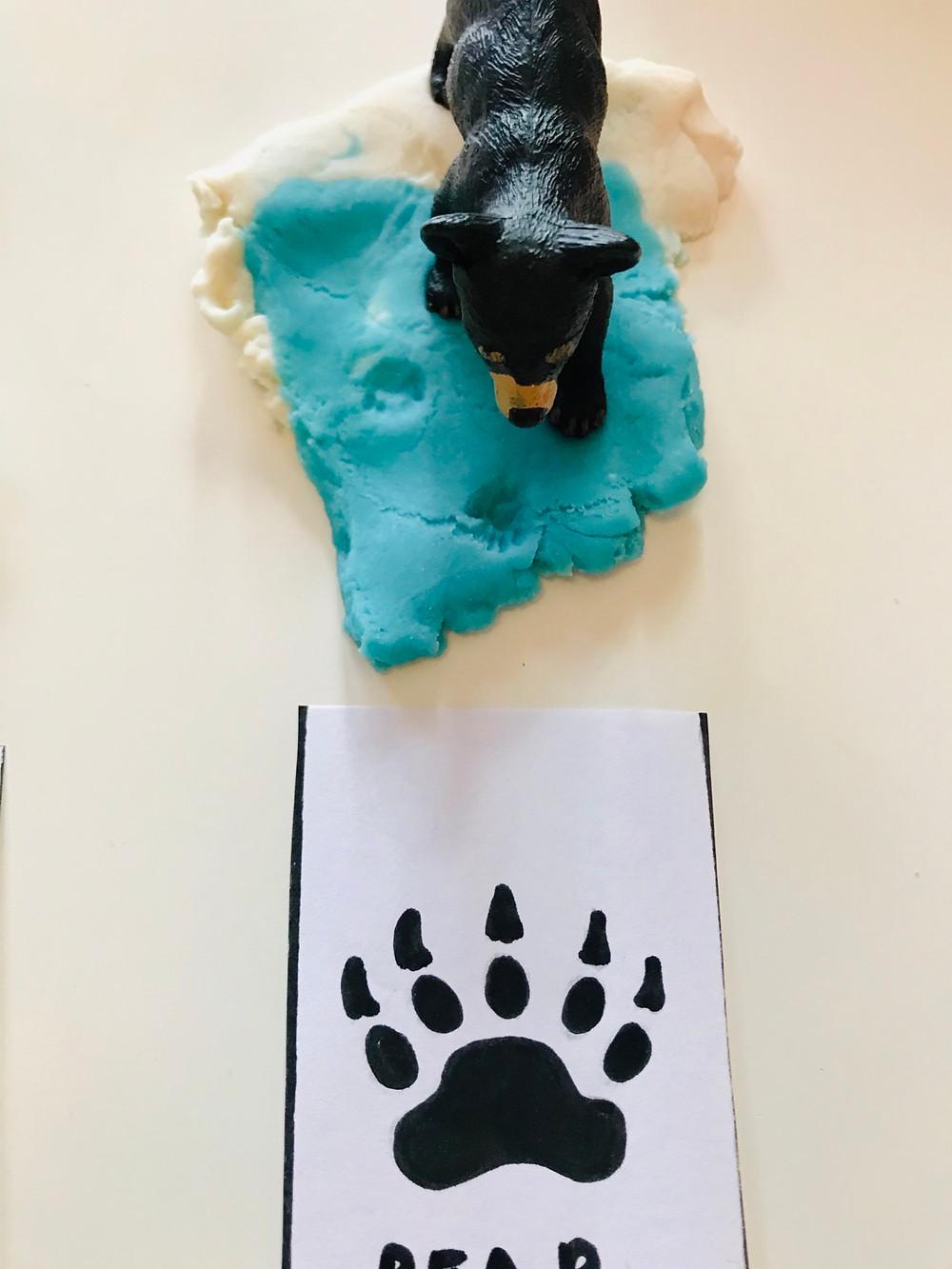 Bear footprint